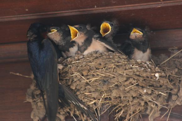 http://hantoine-corvus.cowblog.fr/images/IMG6905.jpg